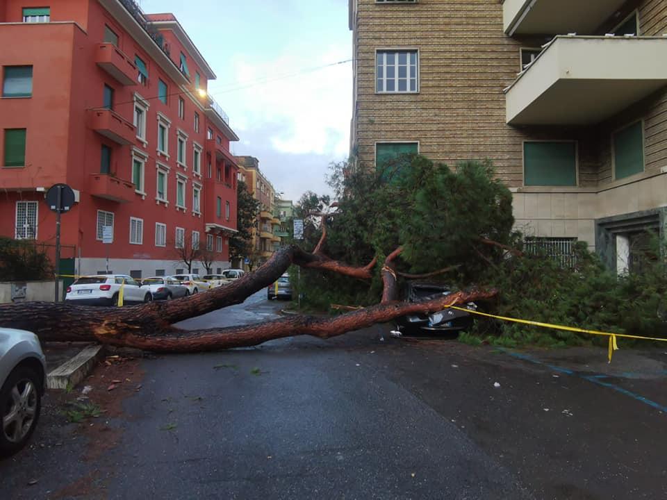 Albero crollato piazza Bologna